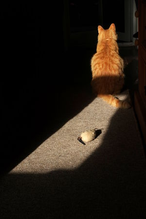 I'm not playing Animal Themes Cat Domestic Animals Domestic Cat Feline Ginger Cat Indoors  Mammal No People One Animal Pets Shadow Toy Mouse