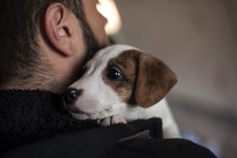 Friendship Man Animal Dog Focus On Foreground Jackrussell Mammal Pet Puppy