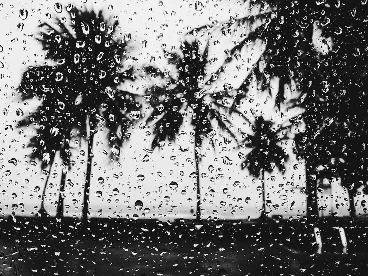 Palm trees seen through wet window