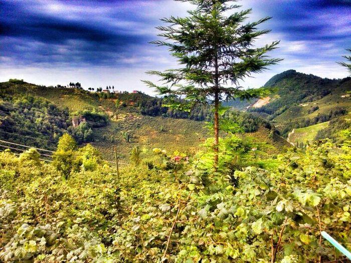 Green Nature Peace Giresun