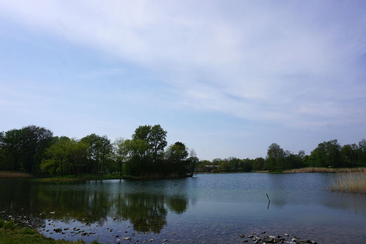 quiet day in Berlin Water Tree Sky Plant Lake Tranquility Nature Tranquil Scene Scenics - Nature Beauty In Nature No People Animal Day Bird Animal Themes Animal Wildlife Vertebrate Reflection Outdoors