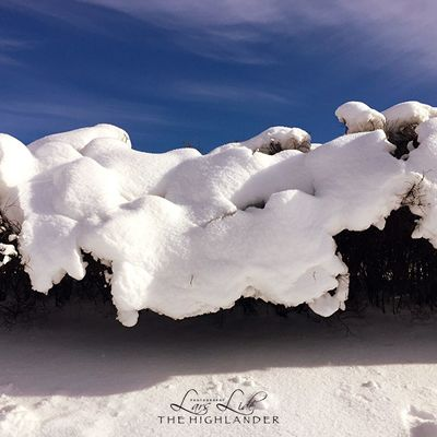 White Color Nature Outdoors Day Winter No People Sky Beauty In Nature Cold Temperature Snow
