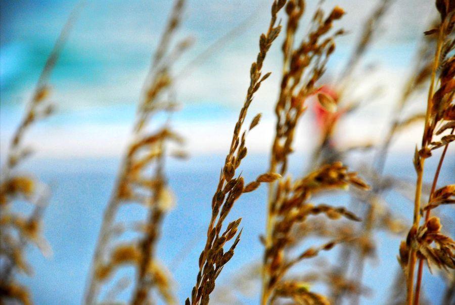 Beach Beauty In Nature Plants Belleairbeach Ocean Sea Florida Choosetampa LoveFl Visitflorida Lovetampa Loveflorida Tampabay