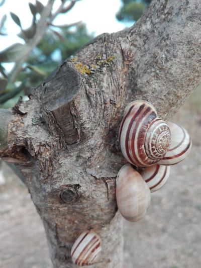 Maximum Closeness Colour Of Life,Showcase July, Snails family, Abstract Snails🐌 Snail Family Olive Tree Adriatic Sea Plant Sunset_collection Sunlight And Shadow Leafs 🍃 Plants 🌱 Sunlight ☀ Sunset Lights Light And Shadow