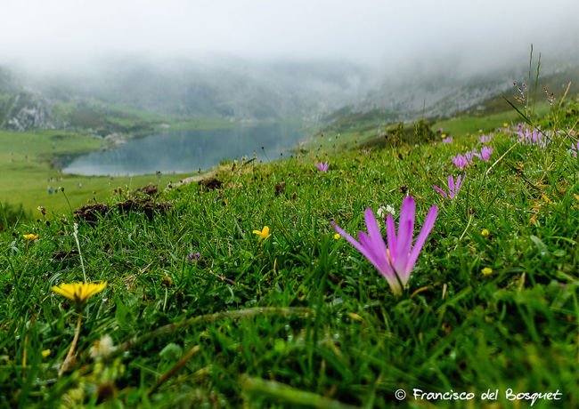 Asturias Asturies Beauty In Nature Celtic Covadonga España Flower Focus On Foreground Franciscodelbosquet Fuji X20 Hiking Holiday Landscape SPAIN
