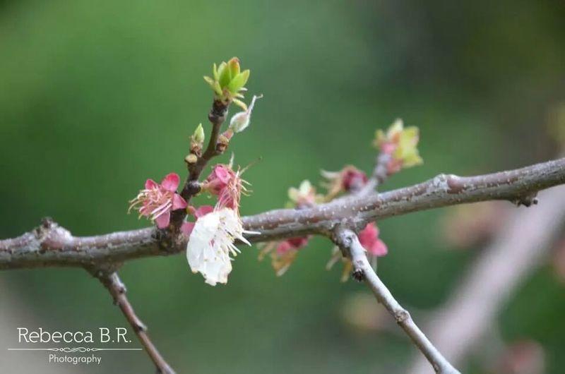 Spring Depth Of Field