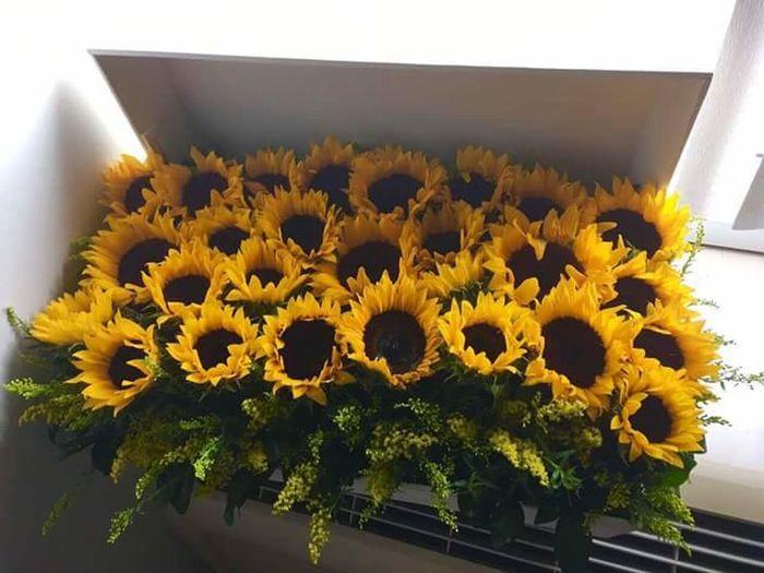 girasol #flor #amarillo #sunflower flower yellow Giras🌻l