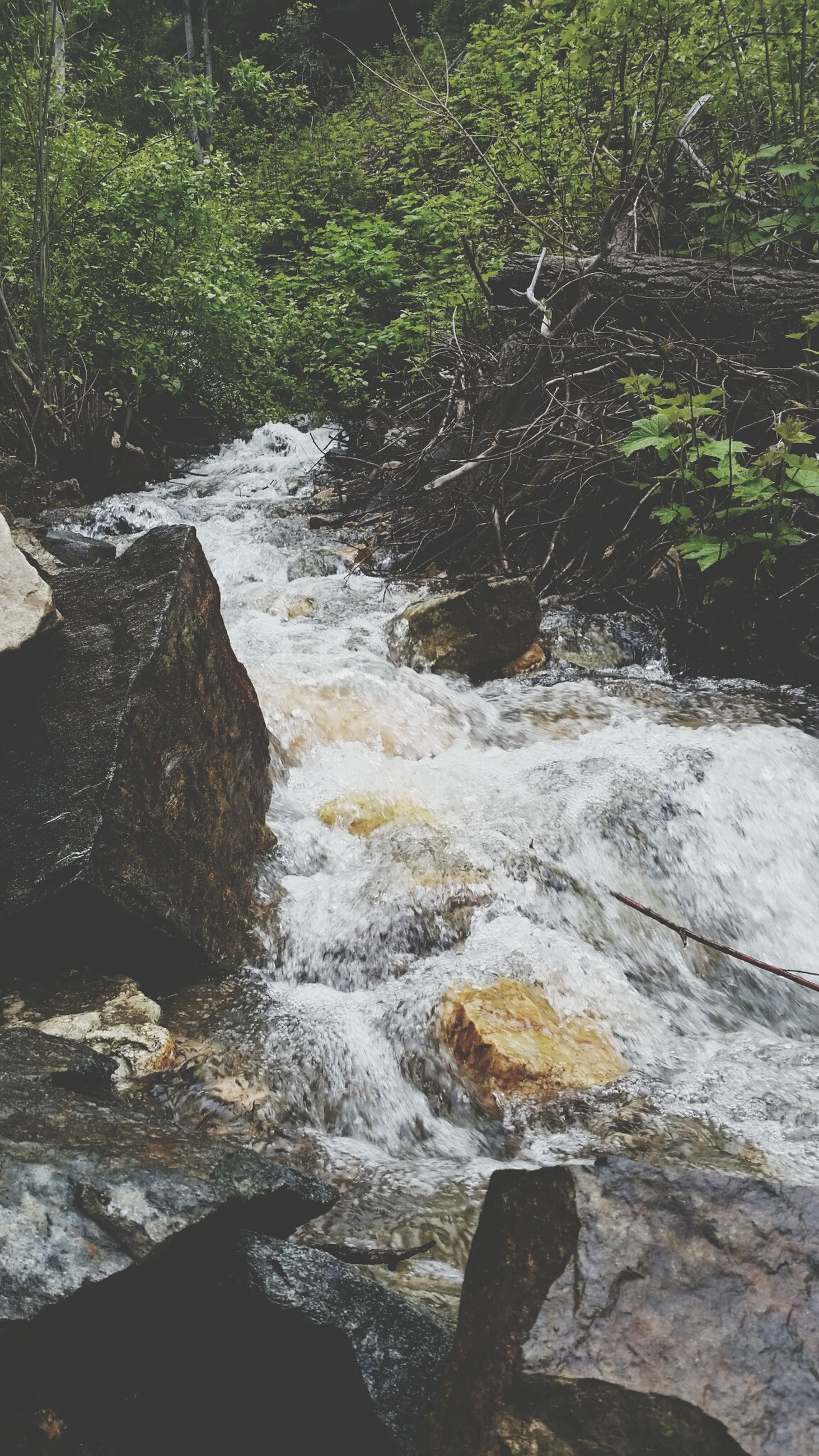 water, rock - object, flowing water, stream, nature, motion, flowing, high angle view, river, waterfall, beauty in nature, forest, day, outdoors, tranquility, sunlight, plant, no people, scenics, rock