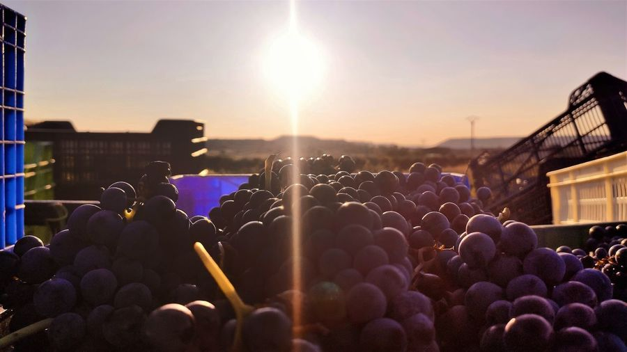 Panoramic view of grapes against sky during sunset