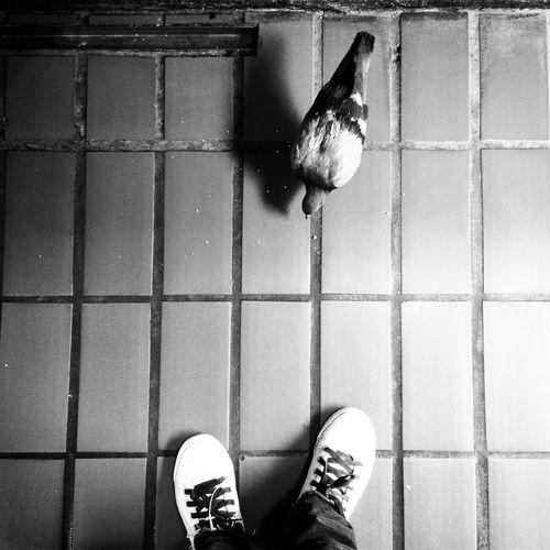 HiFiPhotographia HifiFernandaCoronado Blackandwhite Blancoynegro Pretoebranco Noiretblanc Black & White Blackandwhitephotography