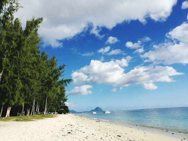 FlicFlac Beach Sea Sand Blue Flic En Flac Sunny Vacations Travel Beauty In Nature Mauritius Beach Filao Tree Flic En Flac Beach. Beach Day Mauritius Island  Mauritiusparadise Cloud - Sky Tree Water Nature Sky Tranquility Travel Destinations Landscape