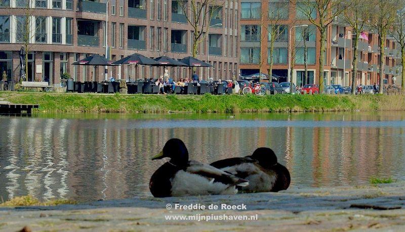 Terrassen seizoen geopend aan de #Piushaven een fotoreportage van bijna alle terrassen aan de kade en langs het water van de mooiste #Stadshaven van Tilburg  >> www.Mijnpiushaven.nl << _-_-_-_-_-_-_-_-_-_-_-_-_-_-_-_-_-_-_-_- #Terrassen seizoen geopend aan de #Piushaven http://wp.me/p51xyA-17o Ook op deze zonnige zondag druk aan de #Piushaven _-_-_-_-_-_-_-_-_-_-_-_-_-_-_-_-_-_- De foto-blog over #Piushaven #NieuwJeruzalem #AabeFabriek #LandschapsparkMoerenburg #Leijpark #Lourdeskade #Kempenbaandepoortvantilburg #ditistilburg #Tilburg #StadsgezichtTilburg #Tilburgdichtbij #Tilburgtewater #Kempenbaan ((( #eendaggeenfoto geschoten is een dag zonder beeld in je leven ))) #Piushaven #Tillywood #lourdeskade #Aandewaterkant #Tilburgismooi #Mijnpiushaven #PiushavenLeeft http://www.mijnpiushaven.nl/terrassen-seizoen-geopend-aan-de-piushaven/