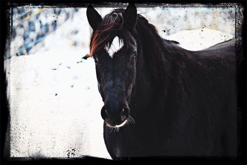 Horse <3 Snowhorses