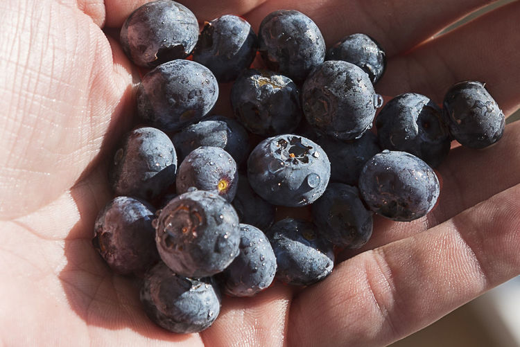 Cropped hand of man blueberries