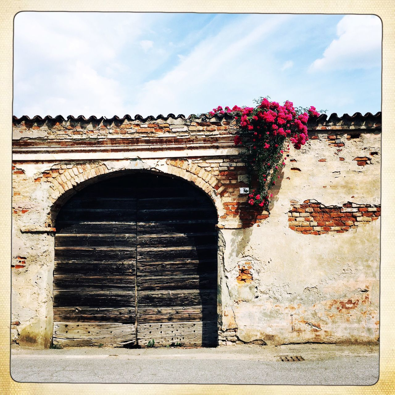 FLOWERS GROWING ON OLD BUILDING
