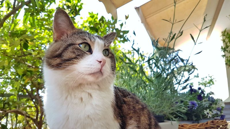 Cat Domestic Animals Pet Greek Cat Cat Portrait Pets Leopard Pets Portrait Feline Domestic Cat Close-up Animal Eye At Home