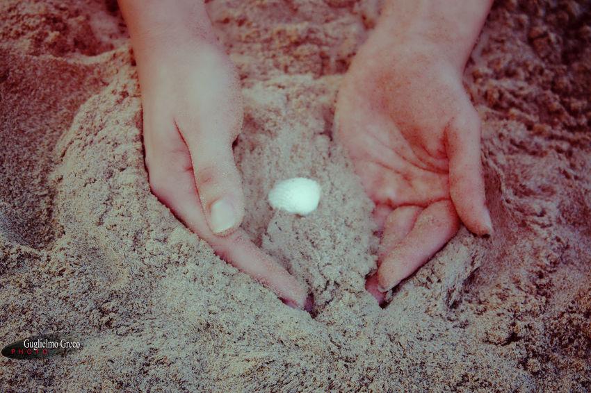 Conchiglie Hands Sand Sand & Hands Sand & Shell Shell