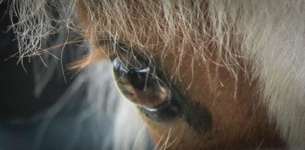 Beautiful Eye of Rosie EyeEm Animal Lover Eye4photography  Eyes Pony Ponies Beautiful For The Love Of Horses I Love Ponies. I Love Horses Wisdom Eyes