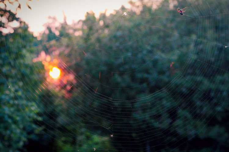 Spider web at sunset. Insect Wildlife & Nature EyeEm Nature Lover EyeEm Best Shots - Nature Spider Web Fragility Nature Spider Outdoors Selective Focus Sunset_collection Sunset Net Vulnerability  Beauty In Nature Foliage Sunrise Sunlight Sun Hunter Web Red Spider Bushes Bushes And Trees Trap Bokeh Background Bokeh Lights Netting NatureZiesel777