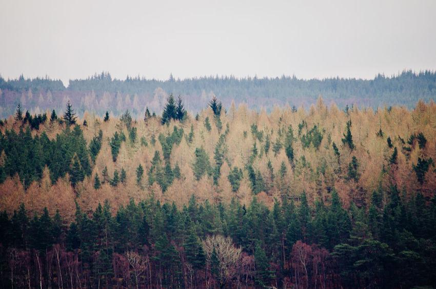 Pine Tree Pine Woodland Forest Scotland Scottish Highlands The Great Outdoors - 2017 EyeEm Awards Nature Photography Eyemphotography EyeEm Best Shots Eyem Best Shots Nature_collection EyeEm Nature Lover