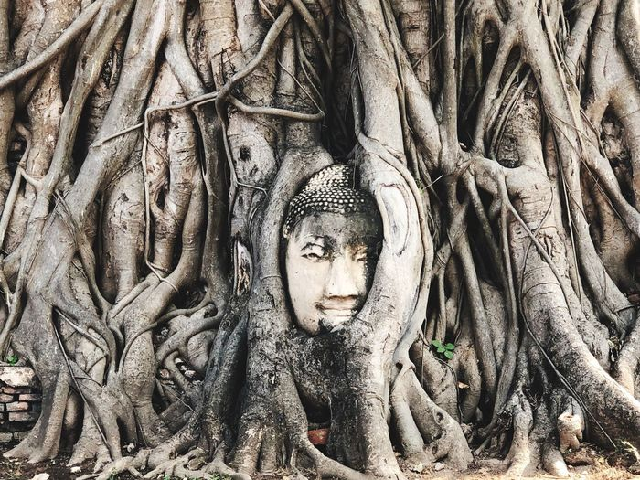 Statue of buddha in tree