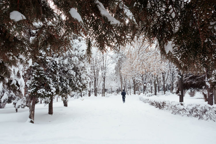 Walking in winter wonderland Snow Tree Cold Temperature Winter Plant Land Beauty In Nature Nature Scenics - Nature Day White Color Field Tranquility Covering Unrecognizable Person Walking Tranquil Scene Outdoors Forest Park Winter Wintertime Winter Wonderland Holiday Pine Tree It's About The Journey