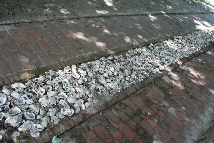 Bricks Clam Shell Currituck Beach Lighthouse OBX Outer Banks NC Oyster Shells Shaded Path Shells Walkway