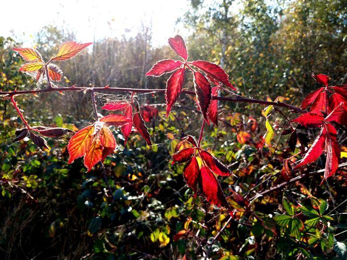beautyful autumn Sunlight Nature Autumn October Sun Sky Fall Leaf Vein