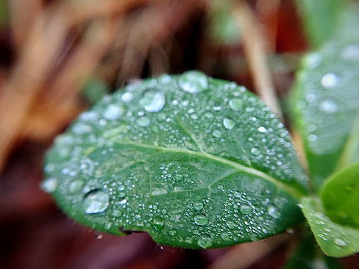 After The Rain Drop Water Leaf Wet Close-up Focus On Foreground Selective Focus RainDrop