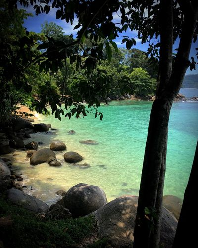 #mare #thailand #sea #thailandia #travel #sole #beach #thai #relax #summer #phuket #sun #kohsamui #island #estate #vacanze #viaggio #spiaggia #holiday #picoftheday #nature #patong #pictureoftheday #natura #modena #bologna #vignola #moodoftheday #photography #love Water Tree Plant Nature Day Sunlight Tranquility Animal Scenics - Nature Land No People Growth Beauty In Nature Lake Rock Outdoors Tranquil Scene Beach