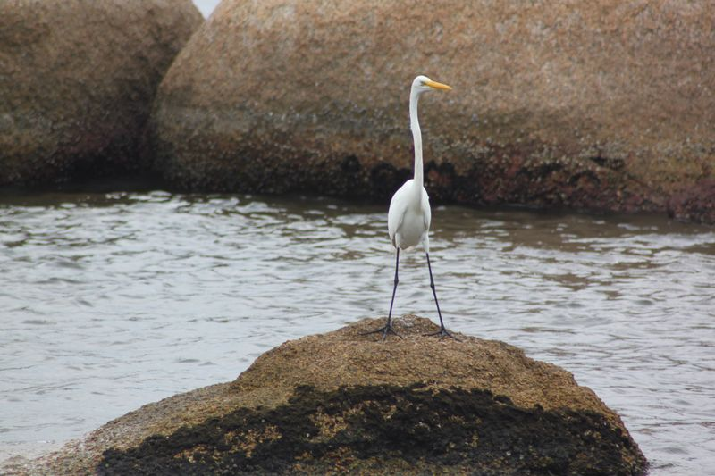 Ilha de Paquetá Water Rock - Object Animals In The Wild One Animal Animal Themes Animal Wildlife Bird Nature Day Beauty In Nature