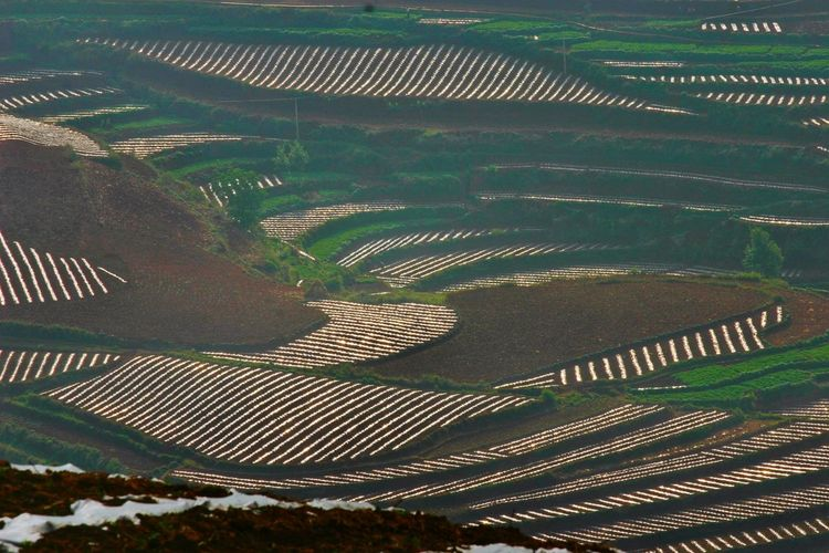 Yunnan China Landscape Sprial Landscape_Collection China Photos Landscape_photography Landscape Rice Paddy Water Rural Scene Agriculture Terraced Field Field Irrigation Equipment High Angle View Cultivated Land Agricultural Field Farmland Patchwork Landscape Plantation