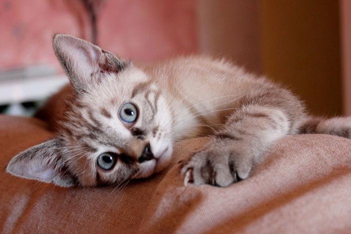 Cat Cats Of EyeEm Catsofinstagram Close Up Close-up Cuties Domestic Cat Feline Gatto Hugo The Cat Micio Pets