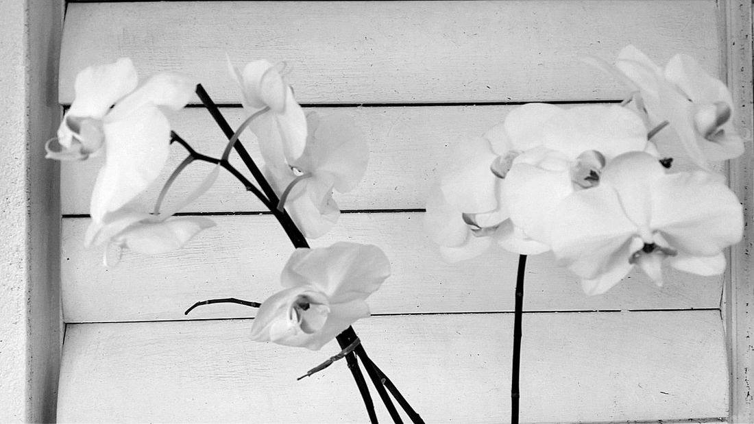 Orchids Blackandwhite Wall - Building Feature Indoors  No People Paint Day Close-up