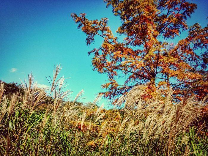 Beautiful Day Colors Of Autumn Autumn Colors Autumn