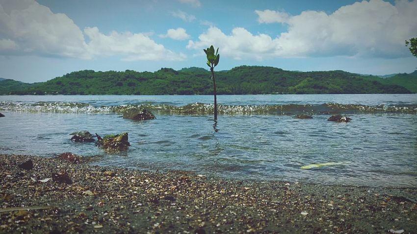 Live it if in its own life will be destroyed, Any hide that .. Water Nature Outdoors Tree Travel Destinations Landscape Beach Travel Swimming Day First Eyeem Photo