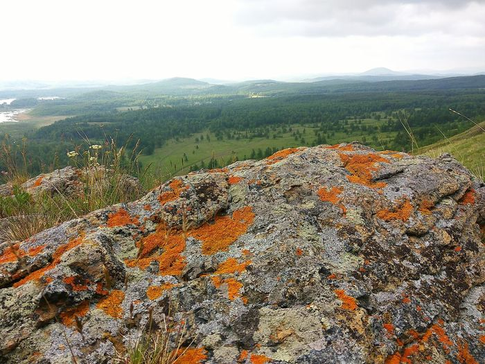High in the mountains in summer on a Sunny day in Russia Mountain Alpine Lichen Moss Moss & Lichen Mountain Mountain Range Russia Green Color Landscape Sunny Summer Drive Trip Trip Photo Tree Sky Landscape Cloud - Sky Close-up