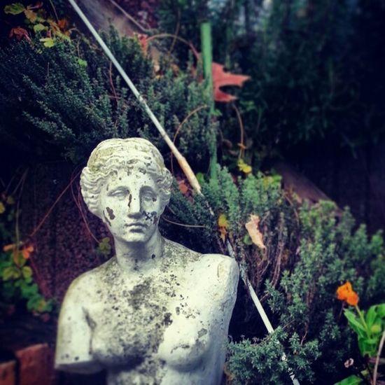 Aphrodite of Milos Greekart Griechischekunst VenusdeMilo Aphroditeofmilos Aphrodite Venus Sculpture Skulptur Garden Picoftheday
