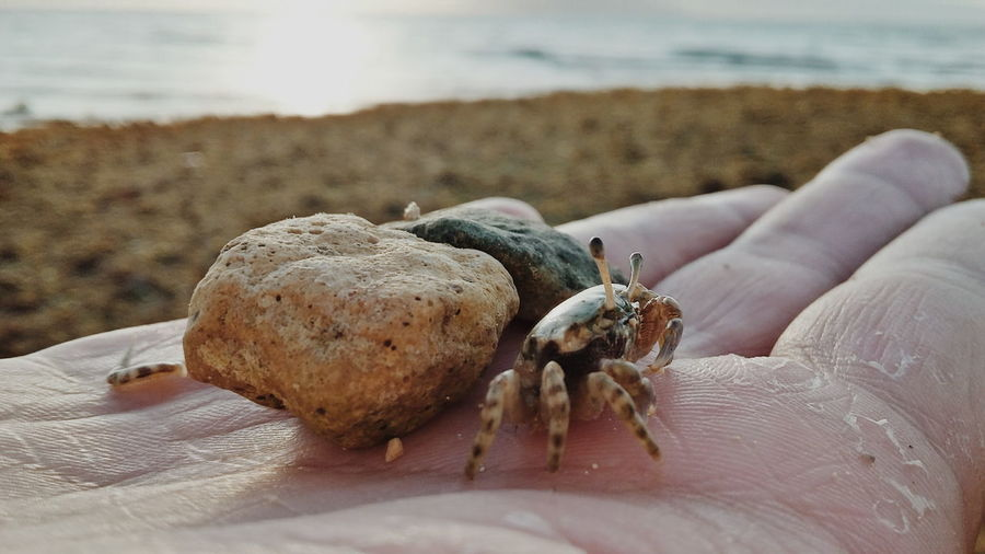 the crab made me do it !!! Hermit Crab Nature Sea Life Water Beauty In Nature Outdoors Sea Close-up Sand Beach First Eyeem Photo Out Of The Box