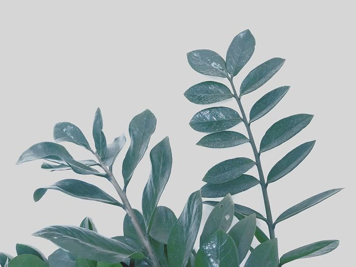 Plant Leaf Growth Plant Part Green Color Nature Beauty In Nature Agriculture Freshness No People Botany Natural Pattern Close-up Pattern Food Outdoors Sky Studio Shot Cut Out Crop