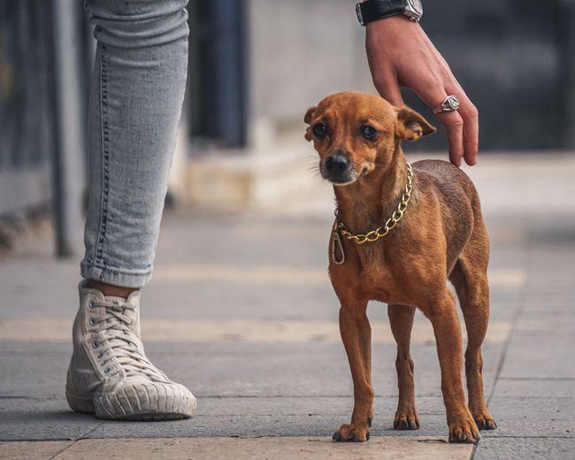 golden dog 🐕