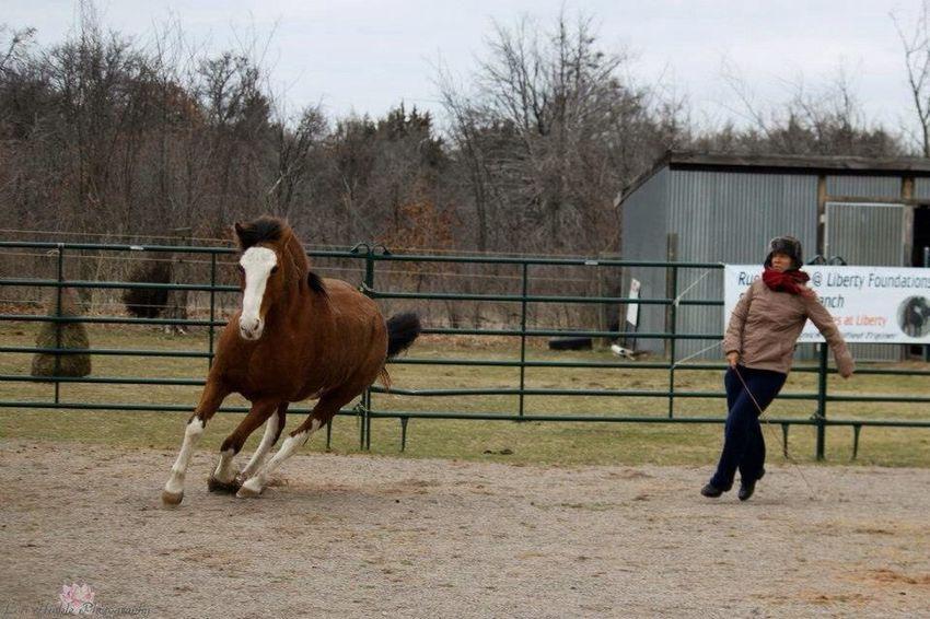 Playing at Liberty I Love Horses Horses EyeEm Animal Lover Dancing