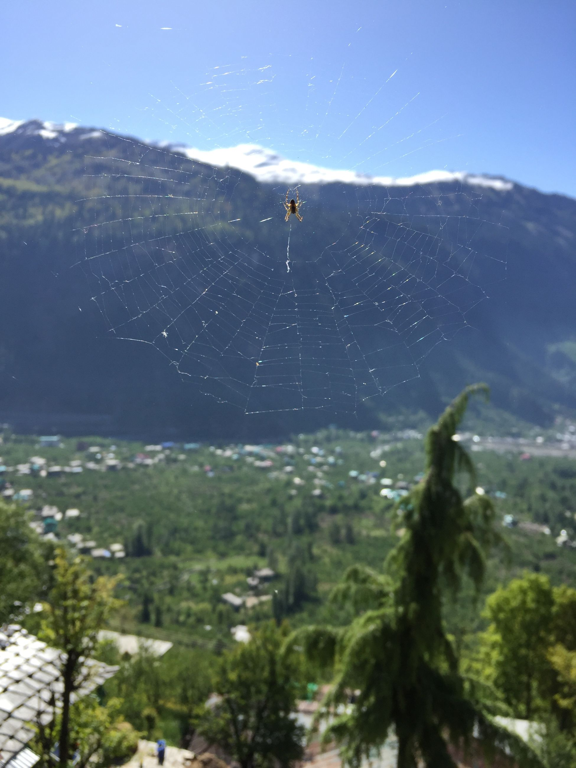 spider web, fragility, nature, sky, day, tree, close-up, beauty in nature, plant, mountain, focus on foreground, vulnerability, no people, animal themes, spider, one animal, animal, arachnid, outdoors, drop, web
