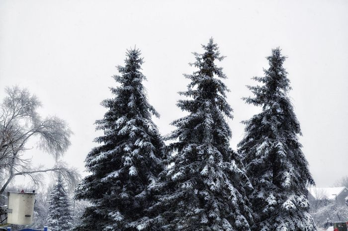 Capture The Moment Edit EyeEm Best Edits Tree Snow Covered Cold Temperature Popular Photos Photography Photographer Canada Winter Outdoors Blackout Stormy Weather same photo.. just with a blue filter! Montréal Winter Wonderland Moments