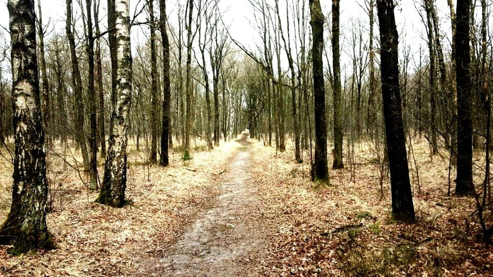 Forest Woods Tourist Hanging Out Enjoying Life Oisterwijk Exploring New Ground Calm