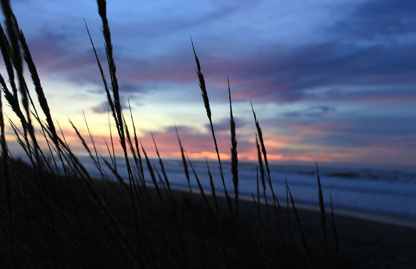 Eureka skies Tranquil Scene Scenics Silhouette Water No People Outdoors Cloud - Sky Sunset Nature Sky Eureka,CA Pnwnaturescapes Beauty In Nature Dramatic Sky Grass Growth Blue