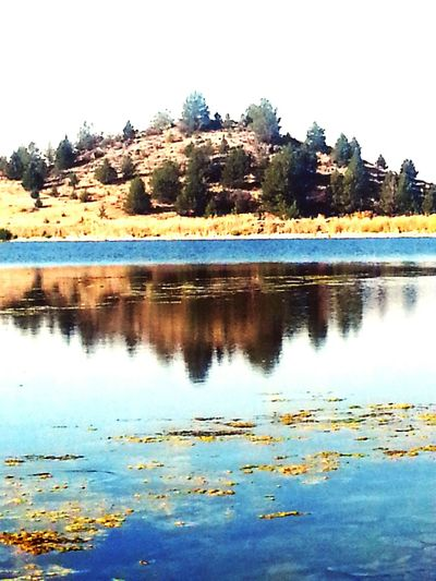 The mountainous terrain at the Shasta Valley Wild Life Refuge reflecting on the tranquil surface of Trout Lake. Water Reflections Naturephotography Beautiful Nature Nature On Your Doorstep Protecting Where We Play Bird Photography Duck Hunting Troutfishing Birdwatching Great Outdoors