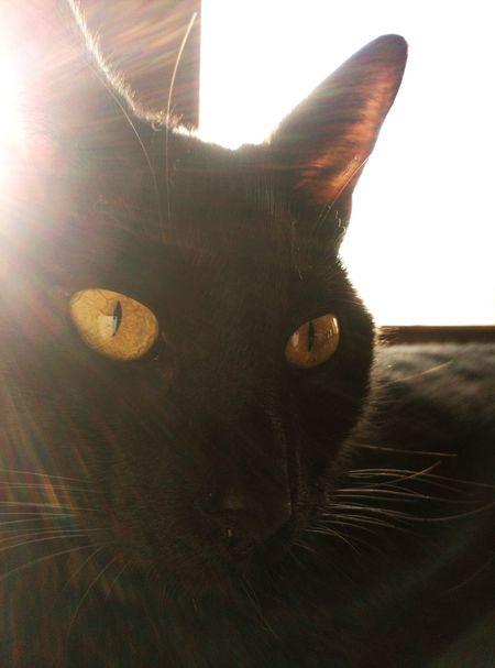 Titecio Relaxing Gattonero Cats Of EyeEm Gatonismo Catblack BLackCat Caturday ! Catsoftheworld Gatifero Gatto😸 Gatnegre Gatos 😍 Ilovemycat Cats 🐱 Catstar #cat #catnap #catoftheday #catpic #catlovers #catsconnect #catinstagram #catsofinstagram #gato #gatinhos #gatto #garfield #petstagram #premierpet #photooftheday #petsofinstagram #picoftheday #petlovers #instabicho #ilovecats #ilovemypet #issovici Gats :))