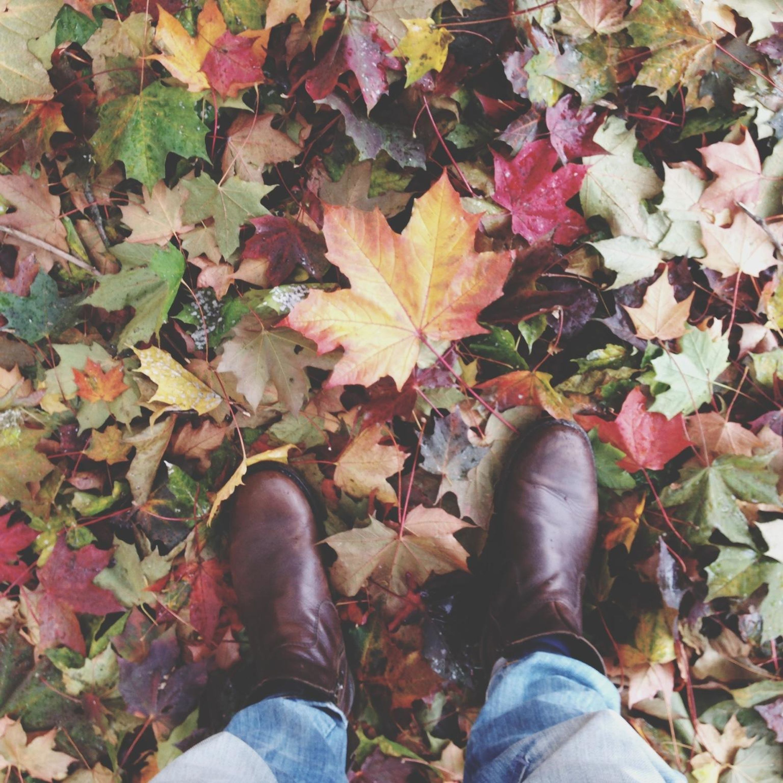 low section, leaf, autumn, person, personal perspective, change, shoe, season, leaves, dry, standing, high angle view, human foot, lifestyles, fallen, unrecognizable person, maple leaf