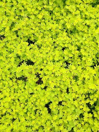 Plants Of Plants